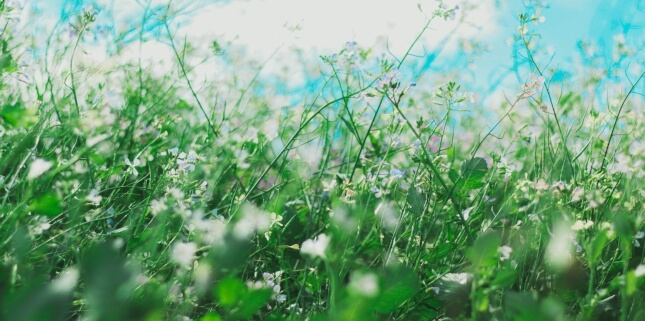Seasonal allergies and how to deal with them